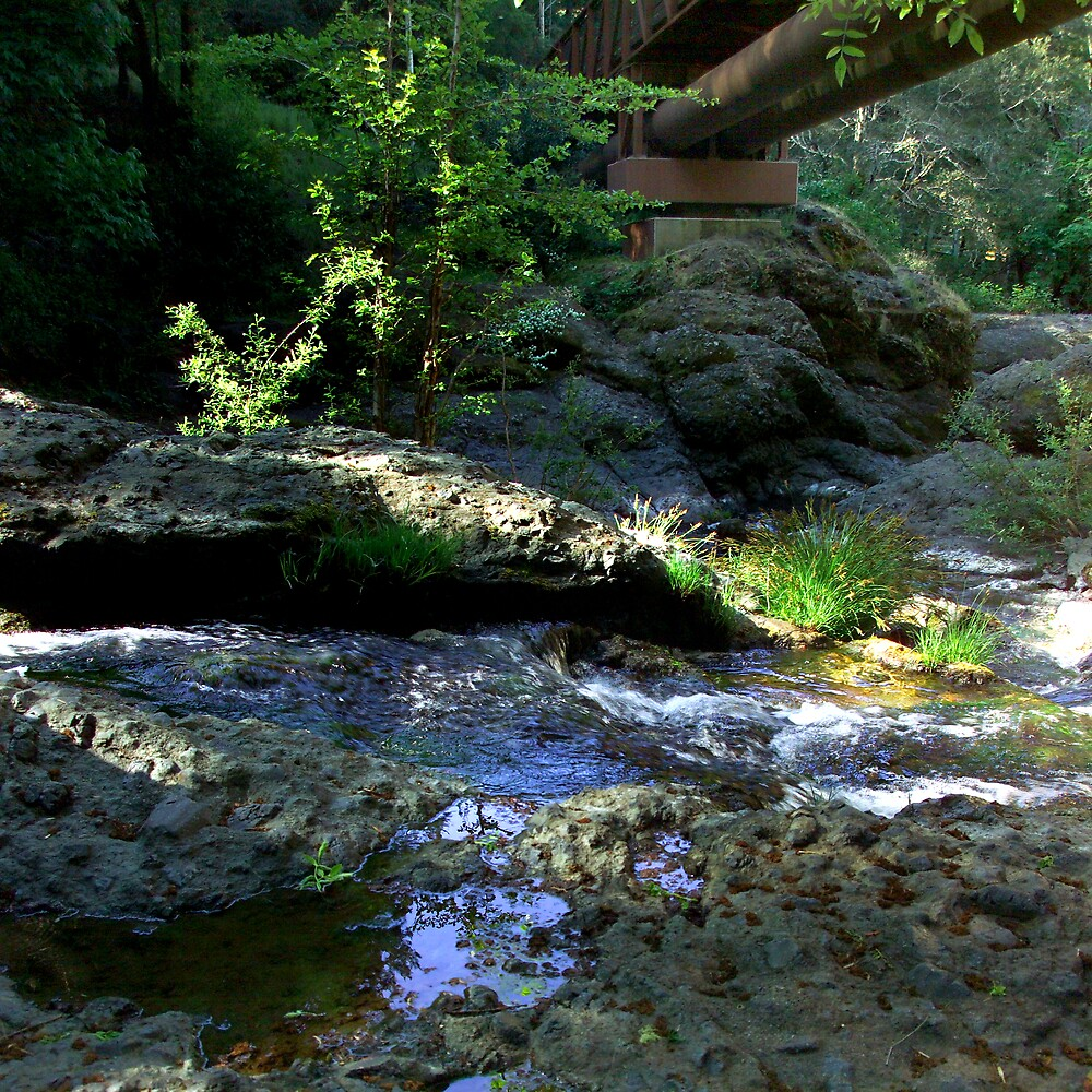 Under the Lagunitas Bridge by Dennis Begnoche Jr.