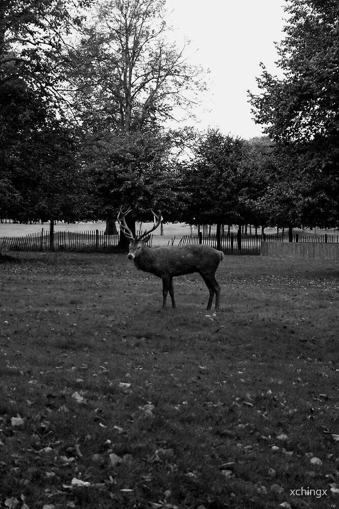 Deer  by Crystal Nunn