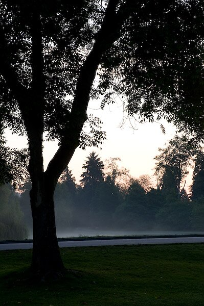 Stanely Park at sunrise by Amber Morey Wu