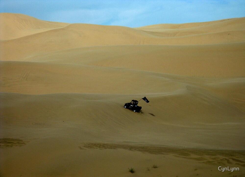 Imperial Sand Dunes, California by CynLynn