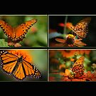 Butterflies in the Window by Bonnie T.  Barry