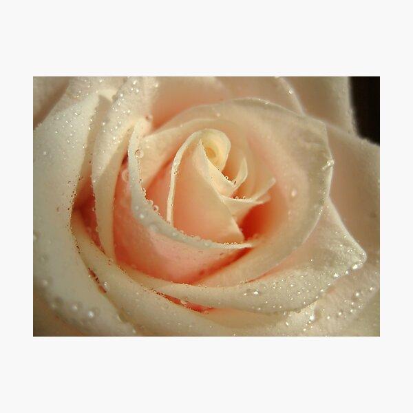 Delicate Rose Photographic Print