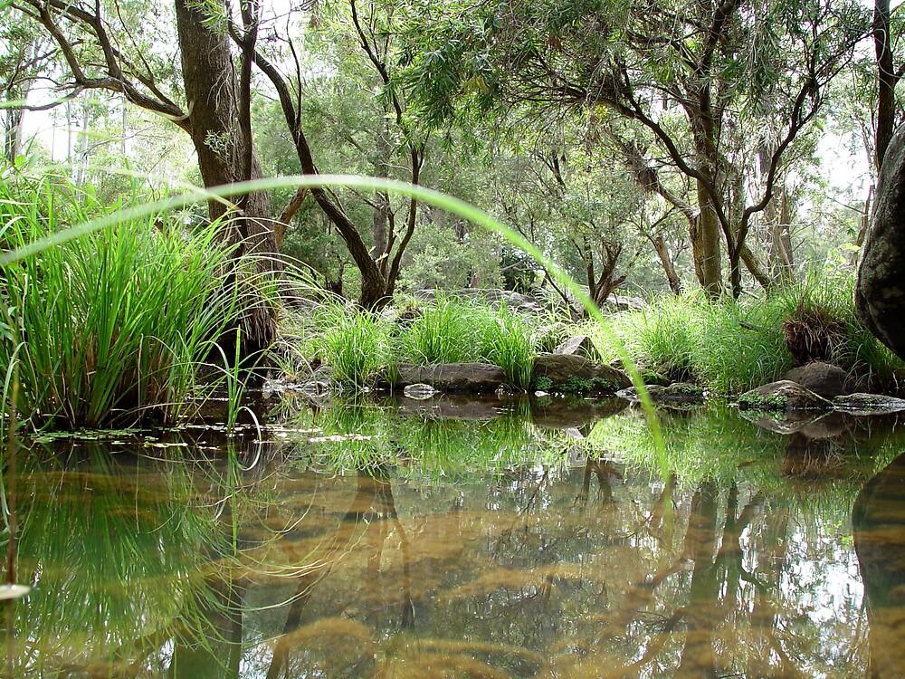 Murphy's Creek by Chris Filer