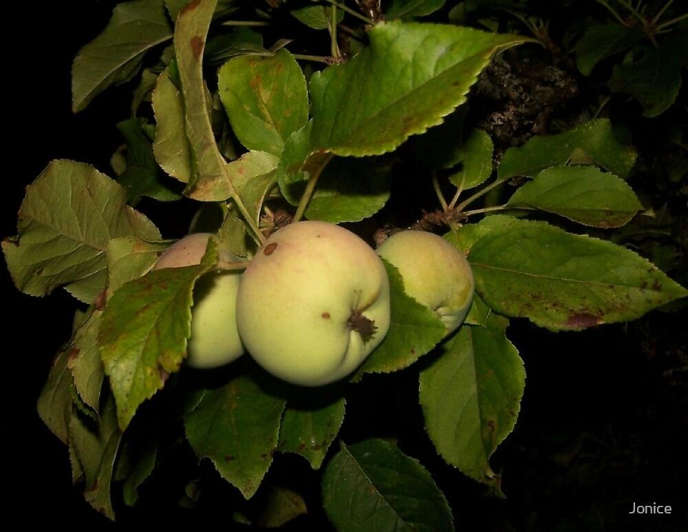 Apple Tree by Jonice