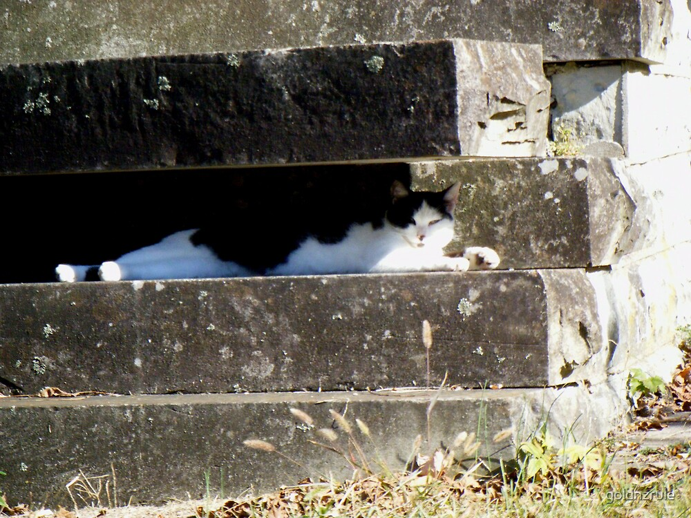 Hidden cat on old marble steps by goldnzrule