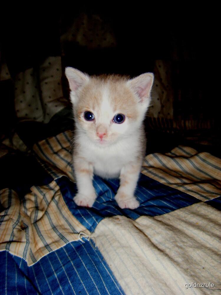 Who Me?? Wild Bill Kitten by goldnzrule