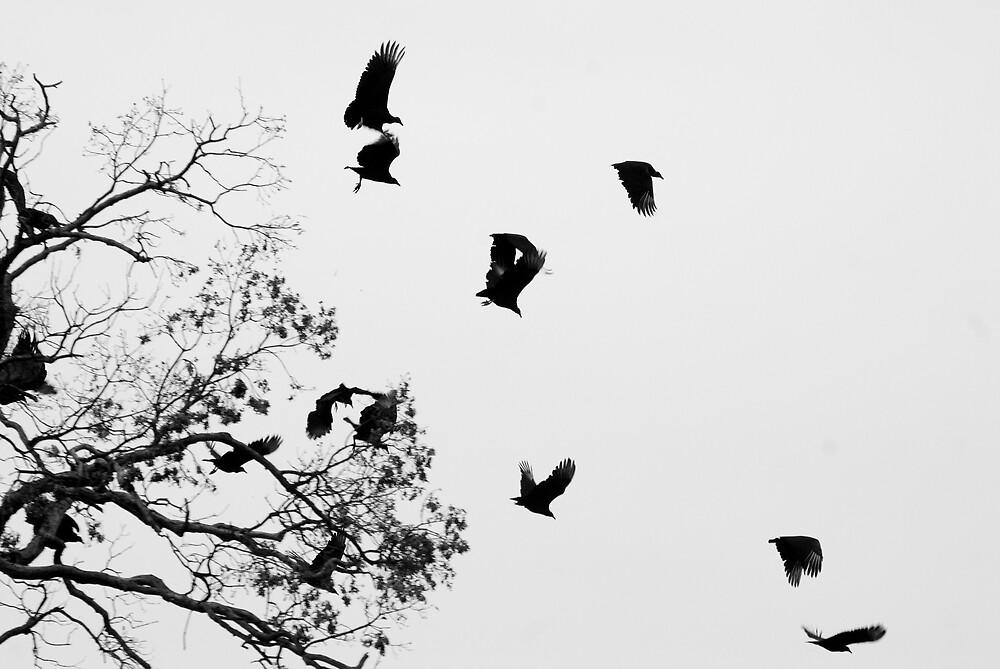 Fly Away by Rod  Adams