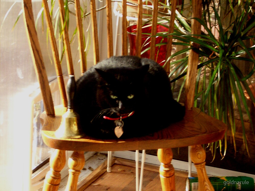 Sarah Lee Darling enjoying the sunroom by goldnzrule