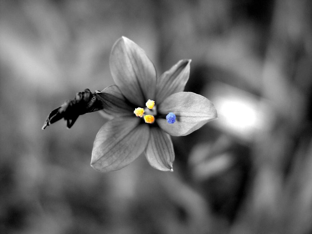 Flower Magic by Chris Filer