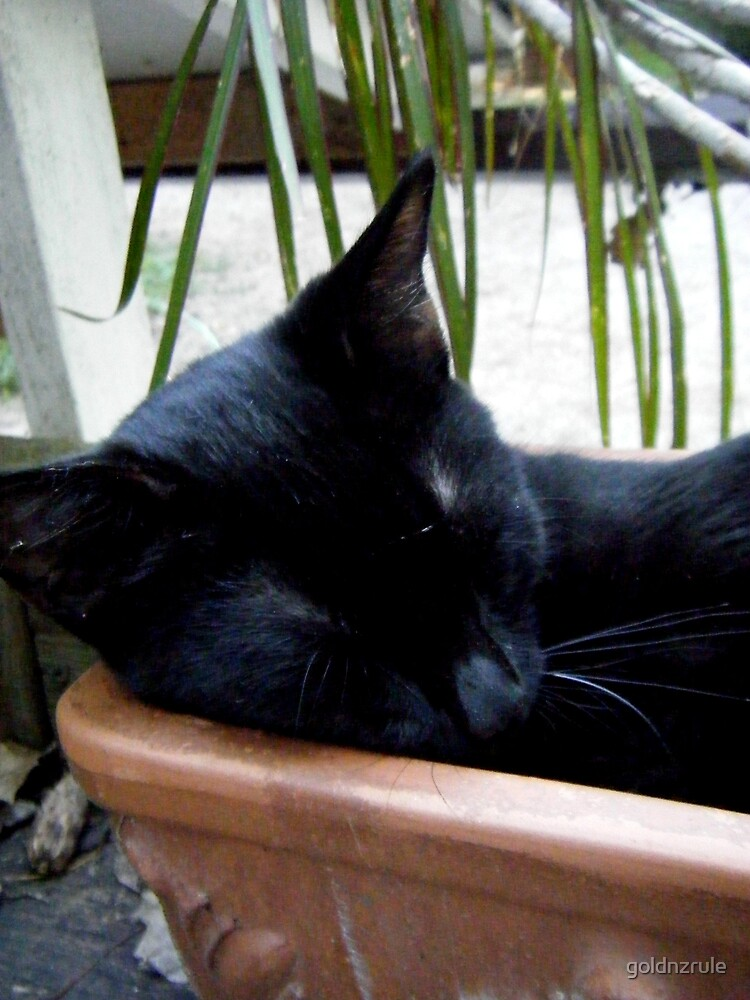 """Matilda """" flower pots make great napping spots!"""" by goldnzrule"""