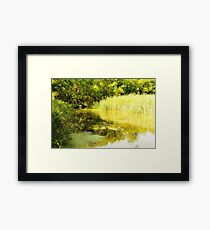 Forest River on a Sunny Summer Day Framed Print