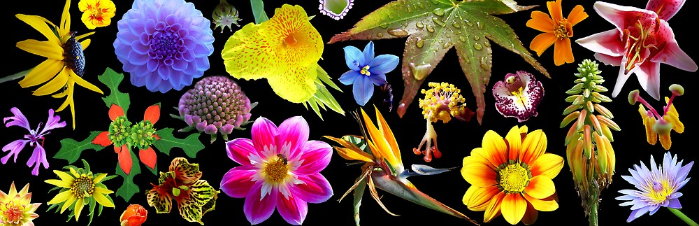 Flower Collage by Chris Filer