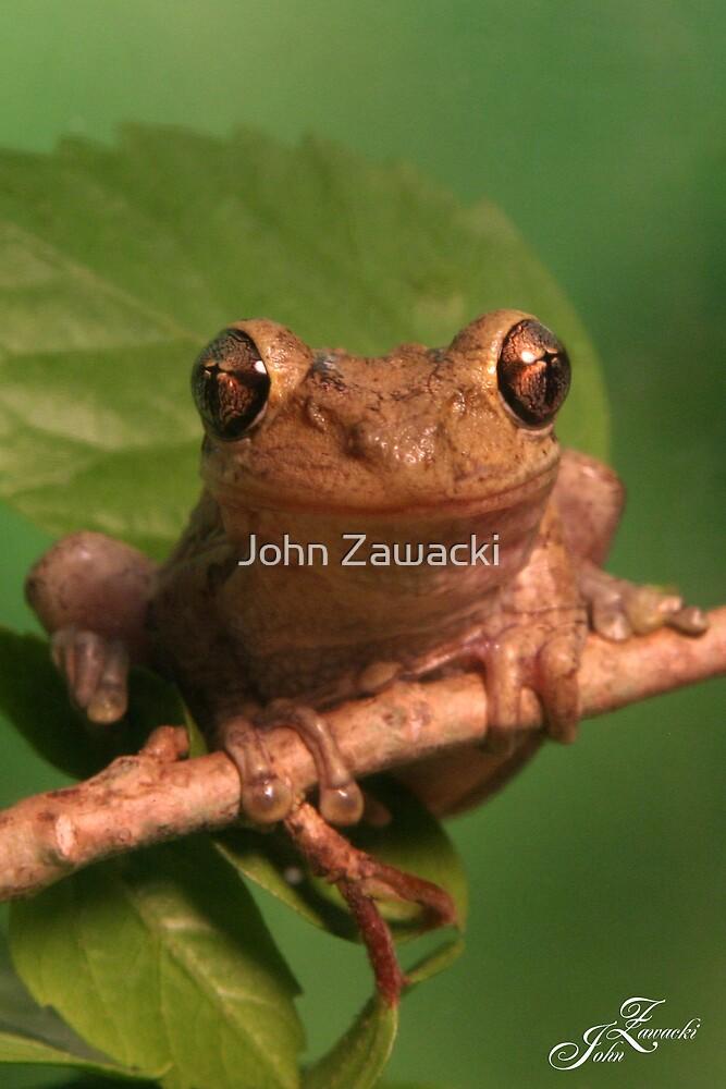 Frog-6480 by John Zawacki