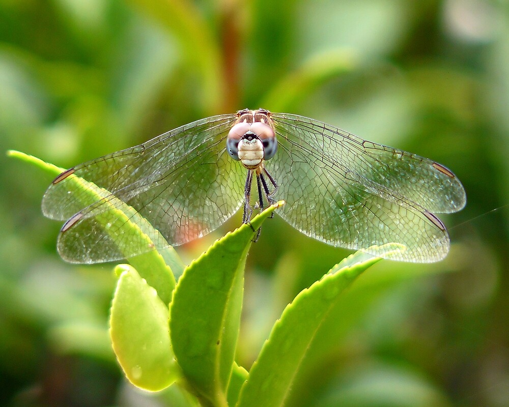 Eye to Eye with a Dragonfly by kaw209