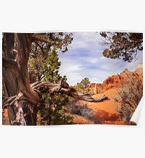 Unique desert beauty at Kodachrome Park in Utah Poster
