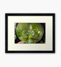 A small snail as seen through a magnifying glass Framed Print