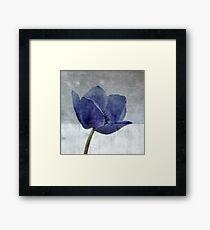 Blue Poppy Framed Print