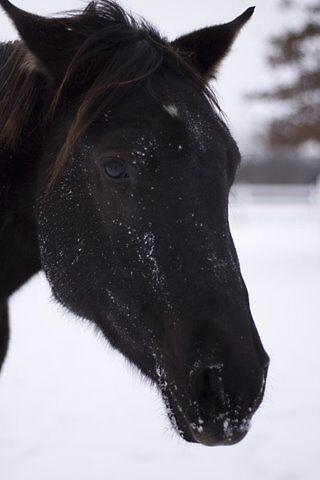 Black Horse by josypics