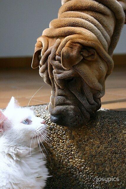 Pets by josypics