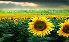 Sunflower Planet by Igor Zenin