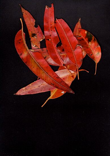 Autumn Gum leaves by ruthlyons