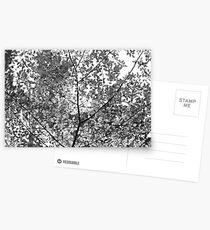 Melancholic Postcards