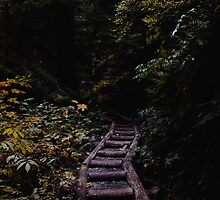 forest path by bellehibou
