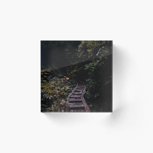 forest path Acrylic Block