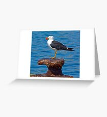 PACIFIC GULL 3 Greeting Card