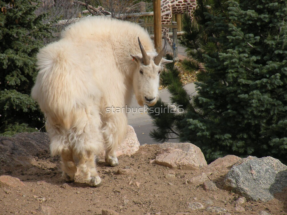On Mountain Tops by starbucksgirl26