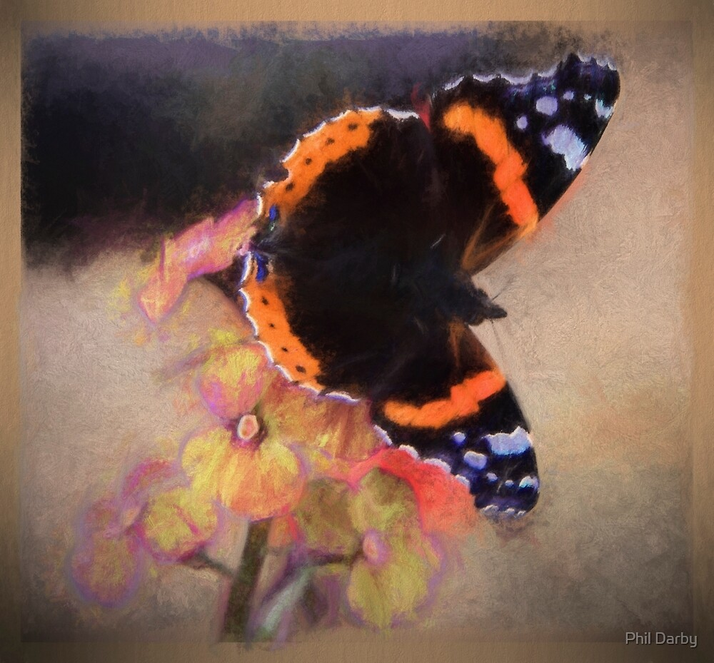 butterfly.... by Phil Darby by Phil Darby