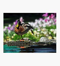 Morning Tai Chi Photographic Print