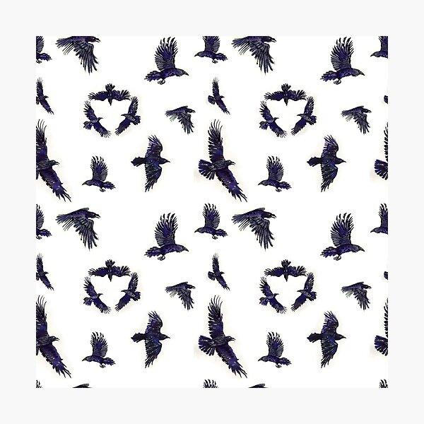flock of ravens Photographic Print