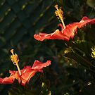 Twin Hibiscus Blossoms by Anna Lisa Yoder