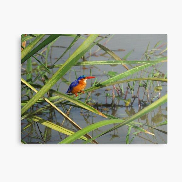 Malachite Kingfisher Metal Print