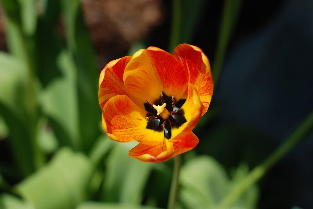 Pretty Flower by kentuckyblueman