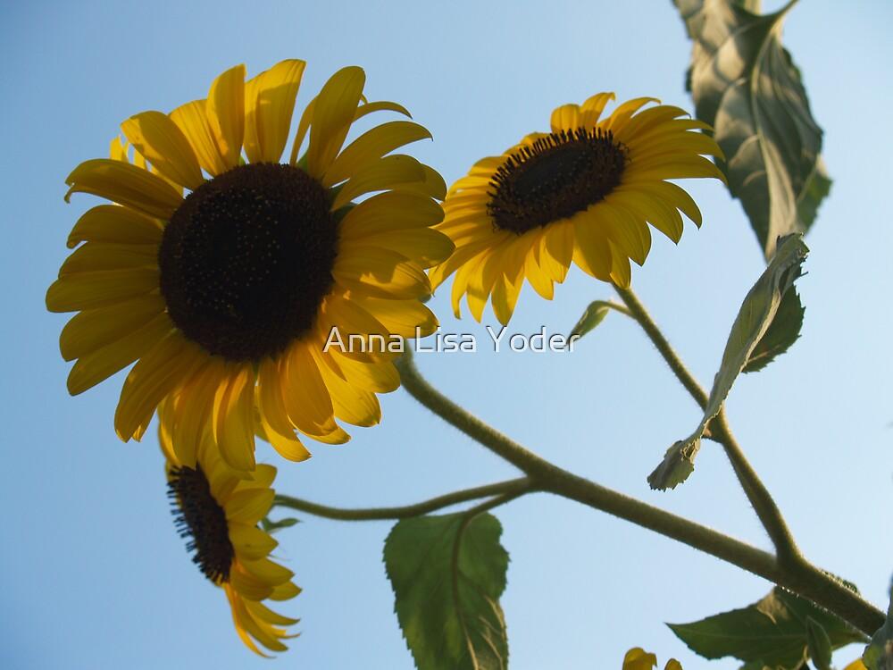 Sunflower Heads from Below by Anna Lisa Yoder