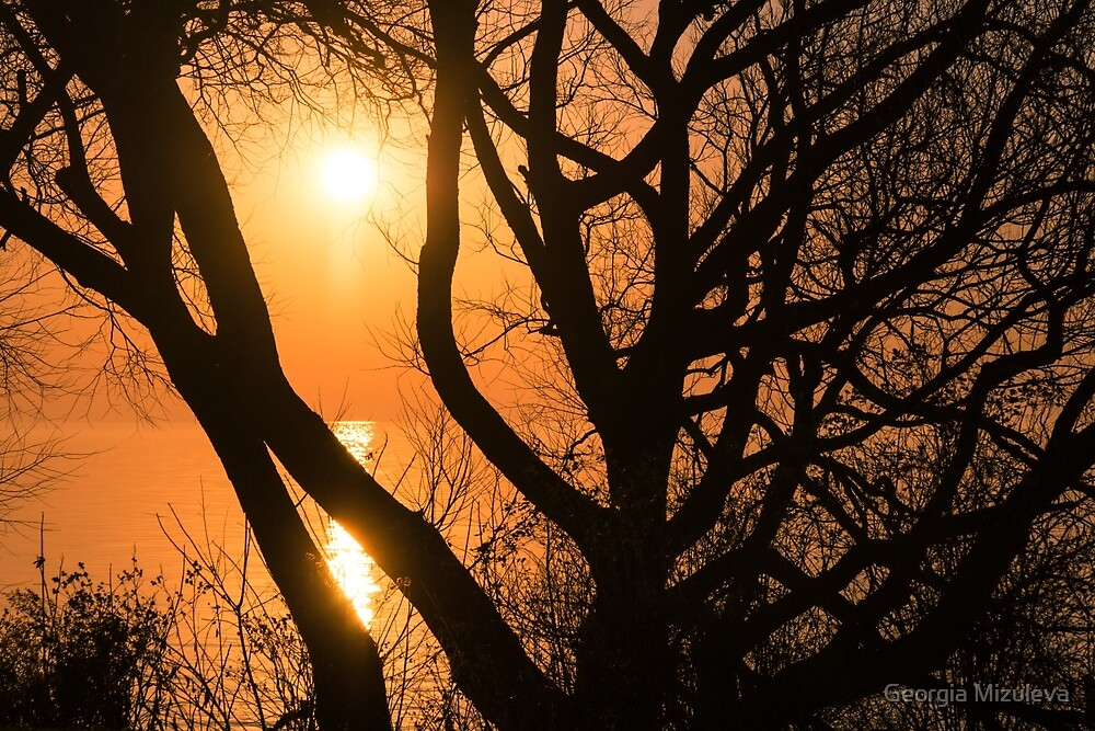Gorgeous Morning Through the Tree Screen by Georgia Mizuleva
