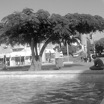 the timles tree by hezyakri