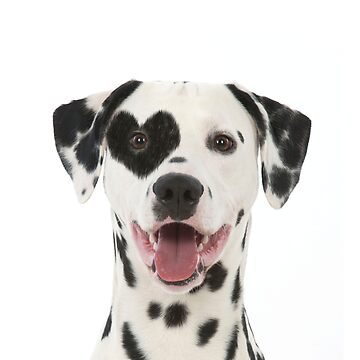 Dalmatian dog with heart shaped eye patch by ArdeaOnline