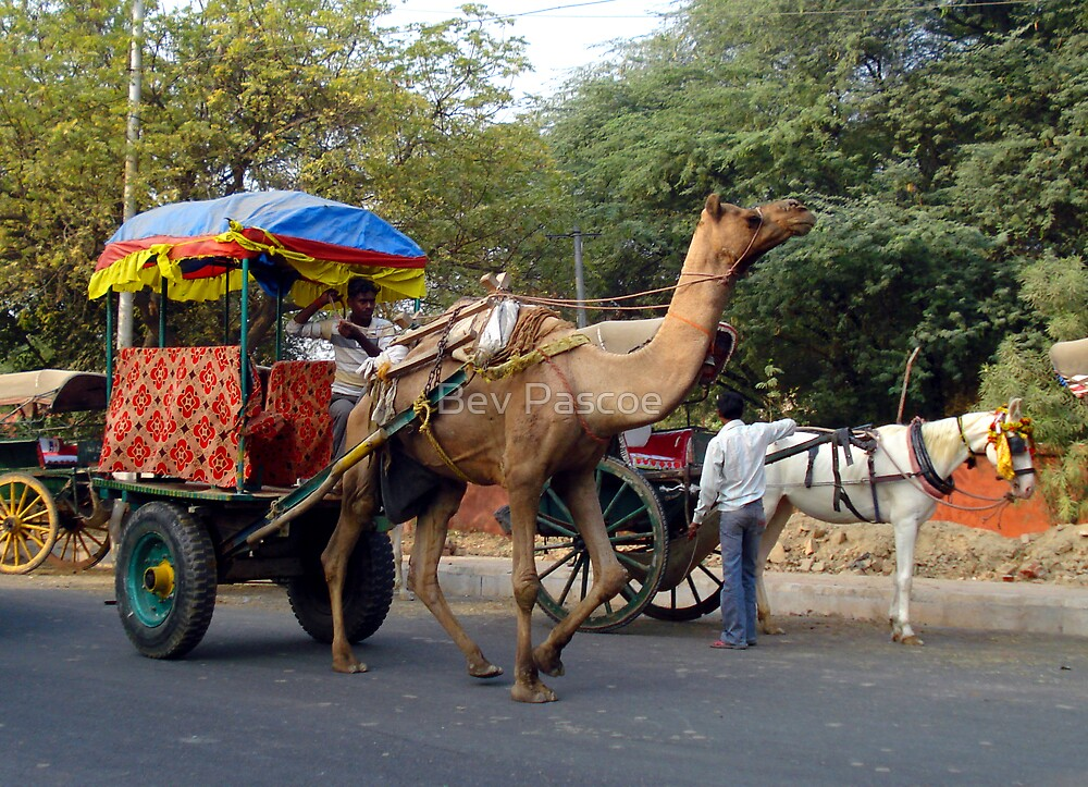 Agra Taxi, India by Bev Pascoe