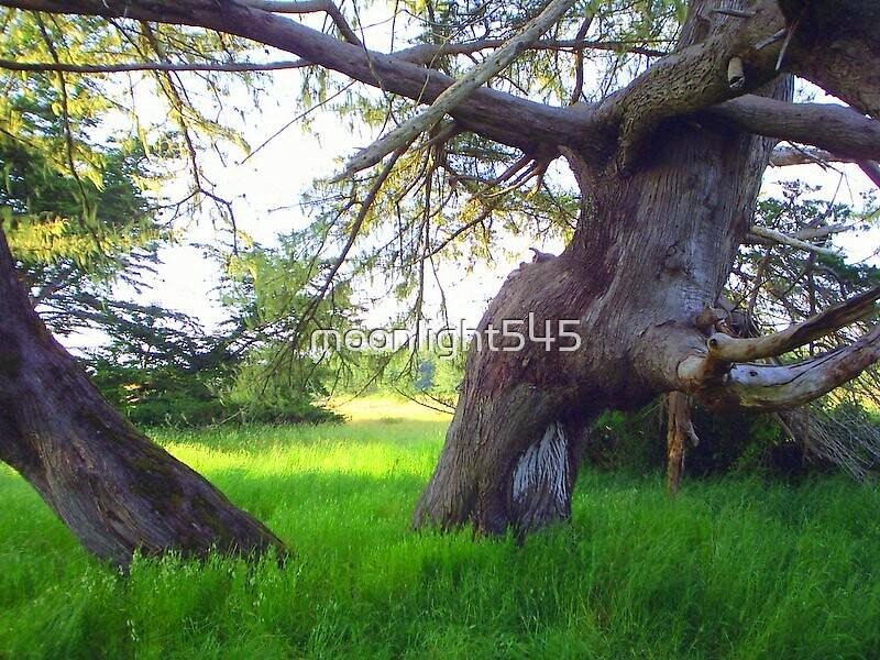Mill Creek Cypress by moonlight545