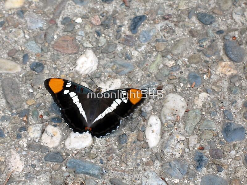 Gabriels Butterfly by moonlight545