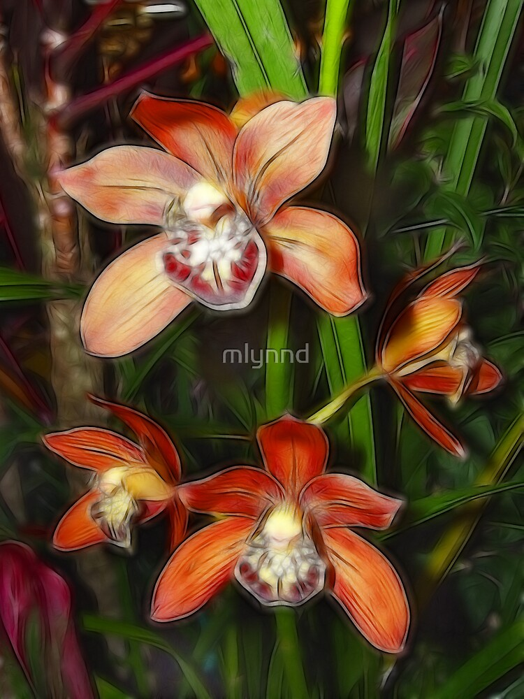 ORCHIDS by mlynnd