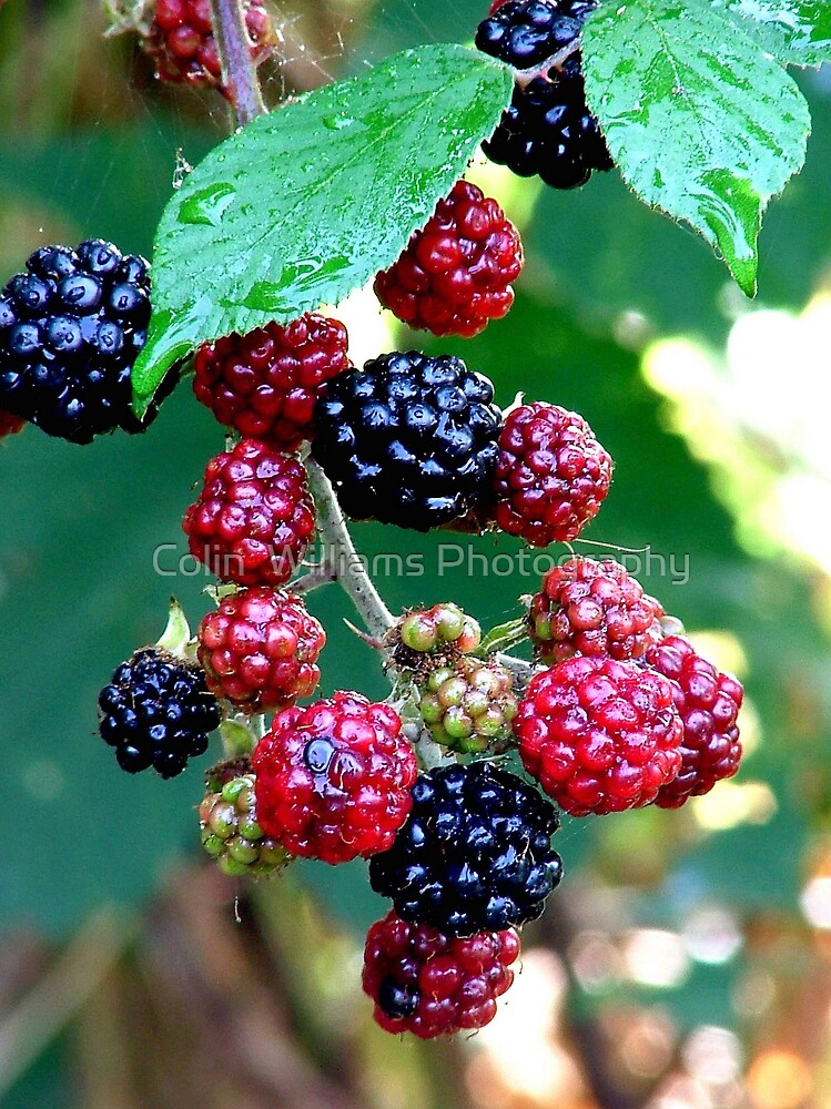 Rain Berries by Colin  Williams Photography
