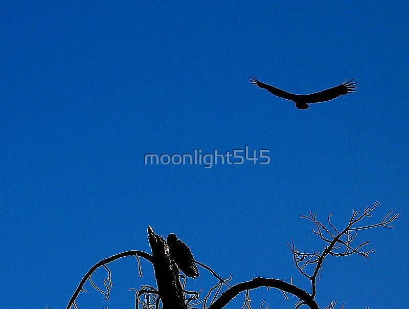 Untitled by moonlight545