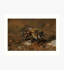Could I Bee Closer Art Print