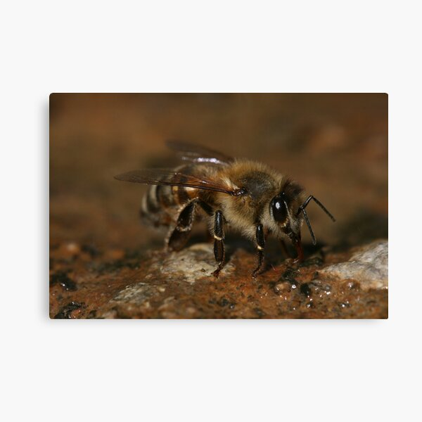 Could I Bee Closer Canvas Print