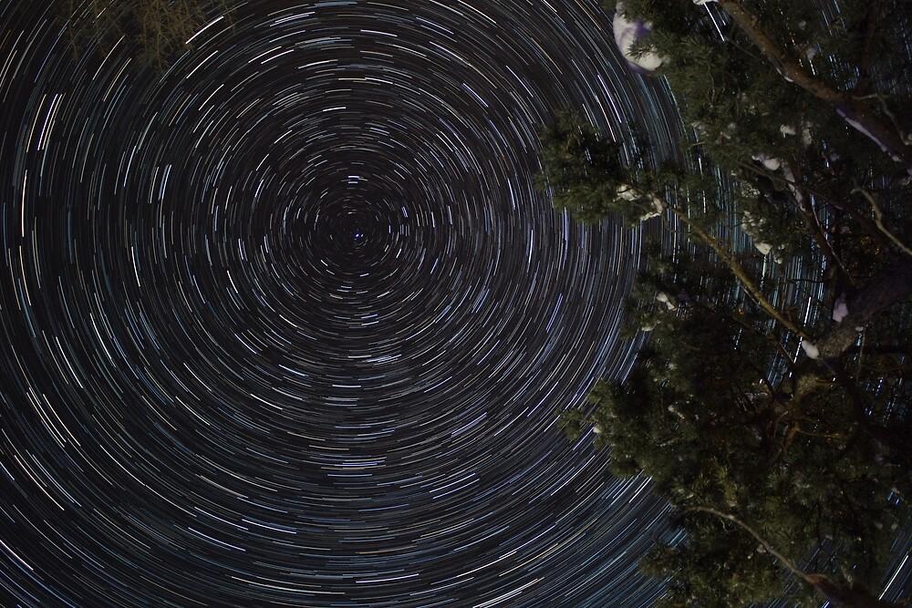 Polaris Tree Star Trails by Armand9x