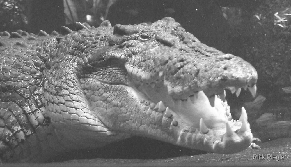 never smile at a crocodile by Rick Playle
